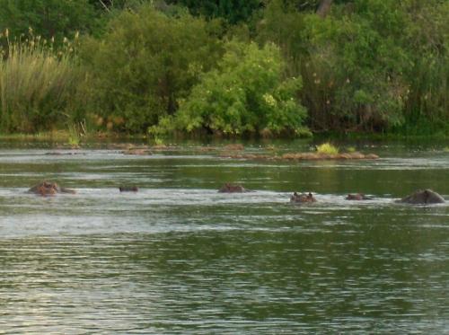 Chobe river boat cruise botswana