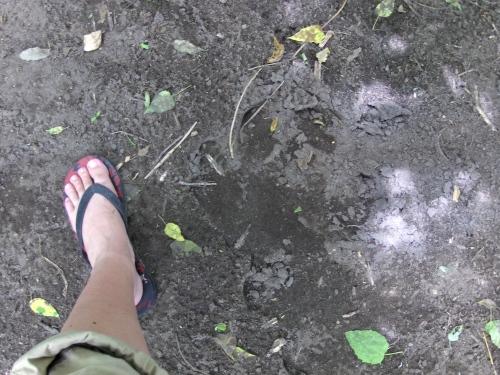 hippo footprint walking safari botswana okavango delta