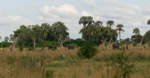 walking safari makoro ride okavango delta botswana