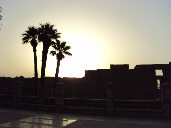 sunset palm tree luxor temple egypt