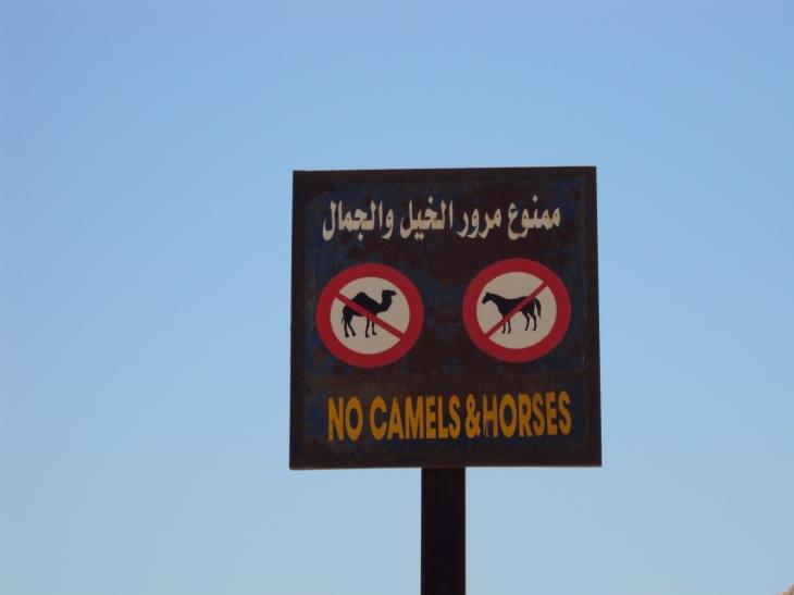 No Camels and Horses sign at Dahab Egypt