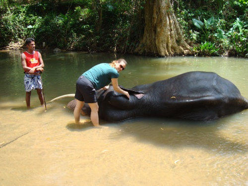 deah bathes an elephant in sri lanka river