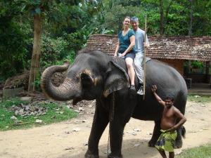 riding an elephant in sri lanka