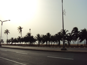 palm trees and ocean lome togo africa