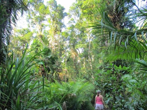 Daintree National Forest Australia