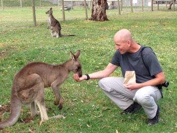 Australia kangaroo feeding