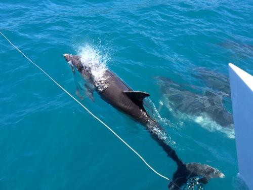 dolphin pod new zealand Abel Tasman National Park