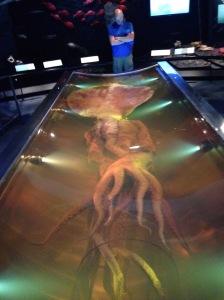 Te Papa Museum giant squid Wellington New Zealand