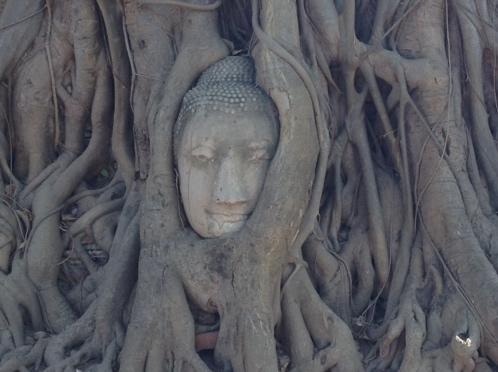 buddha statue head in tree roots ayutthaya thailand chiang mai