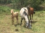 Day old pony!