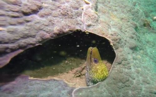 two eels scubadiving oman