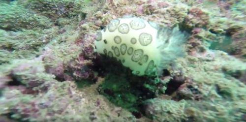 nudibranch scubadiving oman