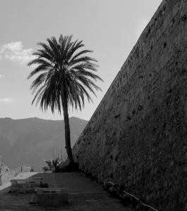 Girne, Cyprus palm tree and wall