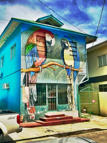 parrot street art port of spain trinidad