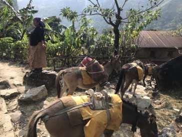 A mule caravan of goods