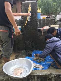 Villagers washing out intestines
