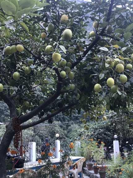 Giant lemons!