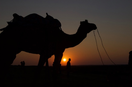 silhouette of camel at sunset Rajasthan India