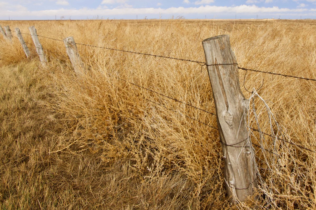 A barbed wire fence demarcates a dry wheat field in the Texas panhandle