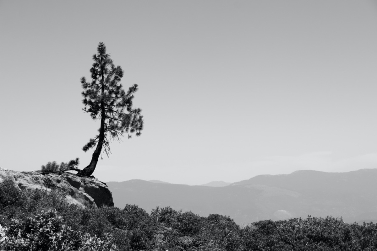 Black and white photo of a lone tree along a range of mountains with smoke clouds obscuring the view in Northern California